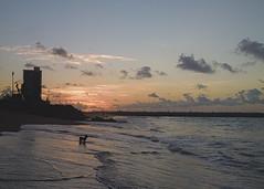 Dog (andr3ms) Tags: sunset sea brazil sky dog pet praia beach brasil mar nokia cu prdosol cielo cachorro microsoft 930 lumia