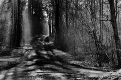 Le chemin (www.danbouteiller.com) Tags: france french normandie normandy foret forest la londe arbres trees light contrast contraste monochrome monochromatic black white noir blanc bw nb blackandwhite blackwhite noiretblanc noirblanc canon canon5d eos 5dmk2 5d 50mm 50mm14 5d2 5dm2