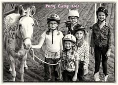 Show day-47 (Webbed Foot Photo) Tags: horses horse pennsylvania ponycamp webbedfootphotography pentaxk1 opengateranch darrenolsen dtolsen webbedfootphoto hunterhillsfarm