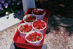 wagonberries (kstetner) Tags: old blue ohio summer chimney sky flower building dusty june fruit forest vintage butterfly cicada wagon flying wire strawberry long candle berries shadows floor path bricks wave books case meat trail type fields medina writer buckets antiques rib patch root hiding outlet picking cookoff berea