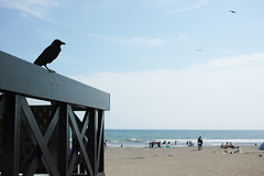 #crow #beach #yuigahama (unz) Tags: foveon sigma dp2q dp2quattro eyefi