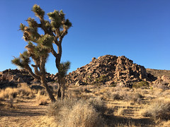 Hemingway (Sam Howzit) Tags: california nationalpark desert joshuatree hemingway joshuatreenationalpark