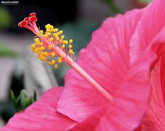 (Mustafa Ahmad) Tags: carnival flowers canon eos spring sigma 28 1020 70200 dammam    18135mm 60d