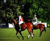 117th Hurlingham Club Open Championship, Argentina / 117° Abierto de Hurlingham YPF (Σταύρος) Tags: vacation holiday game latinamerica southamerica argentina argentine leather cheval nikon boots zebra posh expensive 70300mm sportsaction polo rtw trot vacanze tack porteños roundtheworld paard triplecrown polopony américadosul américalatina globetrotter ypf polomatch poloclub argentinien liveevent 16days 阿根廷 hurlingham onhorseback américadelsur polofield südamerika hurlinghamclub leatherboots worldtraveler brownhorse repúblicaargentina アルゼンチン etiquetanegra chukkas argentinidad pologame poloteam d700 аргентина polomallet zonaa nikond700 chapauno chukkers ellerstina abiertodehurlingham αργεντινή πόλο بولو triplecorona hopefunds 117thhurlinghamopen hurlinghamopen ellerstinaetiquetanegra poloreferee chukers tradiciondelpoloargentino ellerstinanegra yrariannin אָלאָ