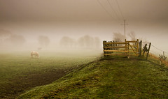 Misty-Gate and horses (john baldeagle) Tags: horses mist green fog moody power olympus line poles telegraph epl1