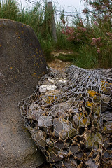 Coastal defences (Skink74) Tags: uk england 20d beach grass wall fence coast seaside wire rocks cage hampshire canoneos20d coastaldefences gabion warblington nikkor35f14 conigarpoint nikkor35mm114ai