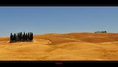 Tuscany (Jambo Jambo) Tags: italy panorama landscape nikon italia hills tuscany cypress montalcino toscana colline cipressi sanquiricodorcia d5000 nikonflickraward nikond5000 jambojambo