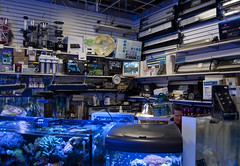 blue fish clock water mall lights store mess tank treasure counter great objects security science monitor equipment hidden wires genius lamps plains shelves drawers stacks squintyeye squintedeye noceilingtile