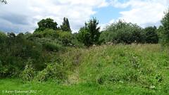 July 9th, 2012 Wildlife haven (karenblakeman) Tags: uk meadow july caversham 2012 hillsmeadow 2012pad