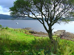 Tree by the loch (EXPLORED) (gmj49) Tags: tree water scotland sony loch dscv1 gmj kinyre