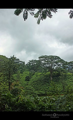 bonakkad forest (Satish Pandiyattil) Tags: wild forest kerala bonakkad agasthyareange