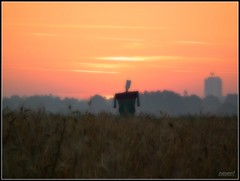 Another scarecrow (Steve.T.) Tags: field sunrise fuji scarecrow earlymorning crops essex daybreak chelmsford firstlight hs10 writtle ommot