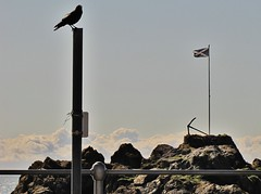 Lookout in the Harbour (Jani Helle) Tags: bird scotland flag anchor perched portpatrick dumfriesandgalloway portphdraig september2011 dornrock