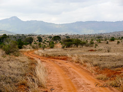 On my way to Taita Hills (Madebycedric) Tags: kenya safari tsavo taitahills terrerouge madebycedric flickrnova taitahillskenya cheminkenya