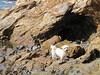 Poppy (russelljsmith) Tags: winter newzealand dog sun beach sunshine coast sand poppy sundaydrive firthofthames 77285mm waitibay
