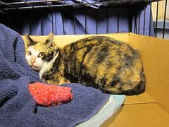 Trippy (Jimmy Legs) Tags: nyc brooklyn tnr bushwick feral bushwickstreetcats