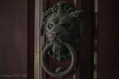 Knock (Gabriel FW Koch) Tags: old orange brown macro closeup bronze canon outside eos slam shadows dof antique teeth lion ring bang thud knock mane doorknocker lionhead wooddoor