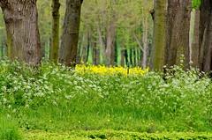 Versailles - 63 le long du Grand Canal dans le parc du Chteau de Versailles (paspog) Tags: park france castle spring versailles april schloss avril chteau parc printemps grandcanal castel frhling 2016 parcduchteau