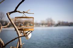 _DSC2937.jpg (Snorre Moen) Tags: china street birdcage beijing kina 2016 xihai