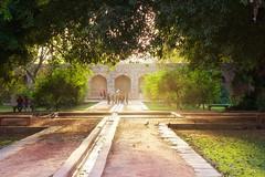IMG_6227 (daviddu*) Tags: 胡馬雍陵 humayunstomb india delhi indiaindia