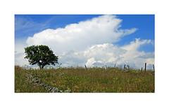 Aubrac (Yvan LEMEUR) Tags: aubrac nature nuages arbre ciel aveyron lozre grandsespaces extrieur landscape paysage france clture