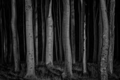 Woodland (ddimblickwinkel) Tags: bw blackwhite nikon sw schwarzweiss tamron d300 d300s