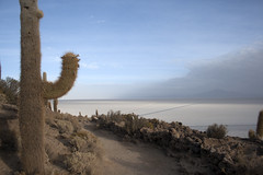 Isla Incahuasi (sophs123.) Tags: chile travel summer cactus nature america canon de landscape san tour flat wildlife south salt pedro atacama latinoamerica uyuni bolvia canon400d