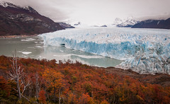 Fall colours (ckocur) Tags: patagonia ice southamerica argentina nationalpark glacier peritomoreno elcalafate icefield southernpatagonia