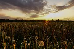 DSC04783 (iwona.malajka) Tags: polen pl chmury niebo plener zachdsoca maopolskie wolazachariaszowska bibice iwonamalajka