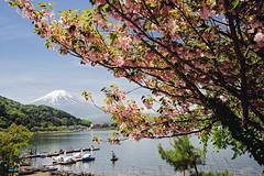 Lake Kawaguchi - View Point of Sakasa-Fuji (10) () Tags: mountfuji lakekawaguchi  kawaguchiko   fujifivelakes japan  landscape yamanashiprefecture  a7r