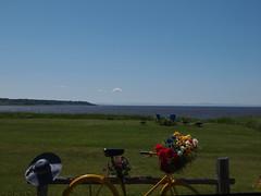 New Brunswick (PierBia) Tags: new canada art bicycle brunswick fiori flovers bicicletta anatre duch