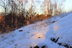 (Jelena1) Tags: schnee trees winter naturaleza snow tree nature grass canon vinter sweden stockholm hiver nieve schweden natur rbol invierno gras neige sverige stokholm arbre zima priroda sn baum estocolmo trd suecia sneg sude drvo trava grs drvece svedska canonefs1855mmf3556is canon600d canoneos600d