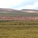 16 Atacama Socaire vers laguna Miscanti