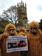 SOS Orangutan, Oxford, UK (endoftheicons) Tags: sumatra orangutan deforestation palmoil tripa internationaldayofaction