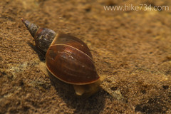 """Snail • <a style=""""font-size:0.8em;"""" href=""""http://www.flickr.com/photos/63501323@N07/7143938737/"""" target=""""_blank"""">View on Flickr</a>"""