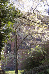En pleine lumire (the yellowrider) Tags: france tree nature soleil lumire arbre eglise batiment nikon1855mm formatportrait nikond40 saintjeansaverne