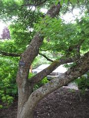 Hoyt Arboretum - Portland, Oregon (Dougtone) Tags: hoytarboretum washingtonpark portland oregon park arboretum tree flora flower trail fir spruce hemlock 060312