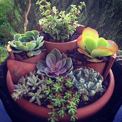 Tiered succulent container garden. Learn how to create your own container garden at this Gardener's Supply seminar!