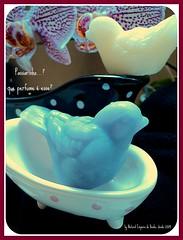 Sabonete, ou passarinho?... (Natural Emporio do Banho Soaps,since 2004) Tags: handmade artesanal craft botão sabonete meltandpour glicerina feitoamão alfineteiro agulheiro sabonetelíquido botãoforrado sabonetebarra kitbanho fuxicotecido saboneteartesanal lembrancinhasabonete