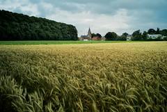 Belgian summer (wtorbeyns) Tags: summer sky color nature clouds rural landscape village belgium wheat grain stormy edegem leicam8 voigtlanderultron28mmf20