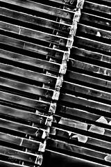 Abstract mood. *.* (⌯ ̟՝˻ п̵м̱ọ̯͡໐яྀα ˺ ໋, ৩՞) Tags: abstract white black bw wb line lines amoora ameera qtr qatar q6r canon اموره امورة اميره اميرة أموره أمورة أميره أميرة قطر الدوحة تجريد تجريدي التجريد خط خطوط الخطوط الخط الوان احادي ابيض اسود رمآدي و أبيض واسود تصوير فوتوغرافي فلكر