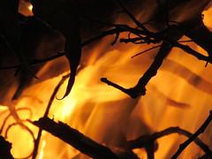 Orange Flame (5of7) Tags: wood orange black hot silhouette yellow canon fire idea flames powershot burning campfire flame burn heat theme serene fav lovely 10fav 20fav 23fav sx30