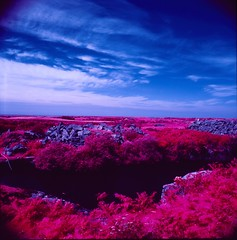 Cornish Landscapes on Aerochrome (blametheparents1982) Tags: pink holiday mamiya tlr film landscape cornwall slide infrared e6 twinlensreflex aerochrome
