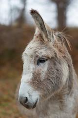 One- (derfian) Tags: animals sweden sverige djur stergtland sna jrnlunden snor hallstangar