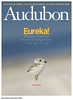 Piping Plover Chick - Front Cover of the National Audubon Society's Magazine (Lisa Franceski) Tags: pipingplover gettyimages charadriusmelodus nationalaudubonsociety pipingploverchick lisafranceski nationalaudubonsocietymagazinefrontcover