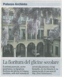 Estratto dalle pagine milanesi del Corriere della Sera del 3 aprile 2014: la splendida fioritura del glicine secolare di Palazzo Archinto (foto Matarazzo).