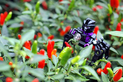 Airachnid and some chilli padi (Quelynn) Tags: flowers toys singapore robots transformers minifigures kreo kreon gardensbythebay airachnid