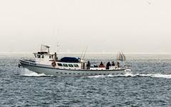 (seua_yai) Tags: sanfrancisco california usa america boat thecity bayarea northamerica sanfranciscobay charterfishingboat sanfrancisco2015