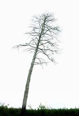 The tree (Lina Molodaya) Tags: city plants tree nature landscape outdoor ukraine minimalism kyiv natureandnothingelse