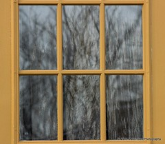 28 January 2016: Reflections and magnifications (RobinMSP) Tags: door winter window nature reflections maryland easternshore discarded dailywalk outbuildings maidinsunphotography january2016c